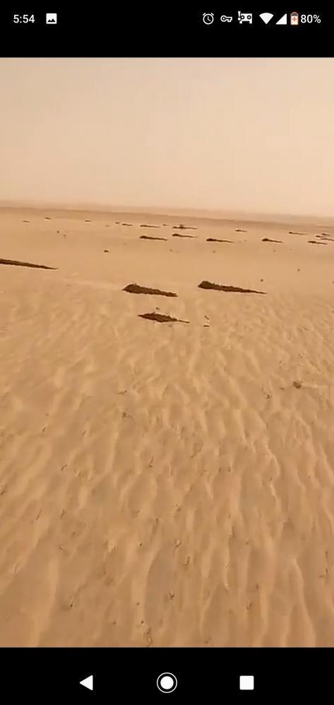 デマ 中国 バッタ