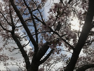 sakuranomori20212.jpg