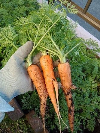 carrot20210131.jpg