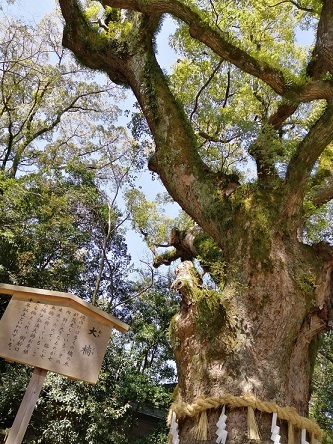 daiboku20210323.jpg