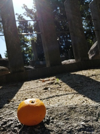 orange20201030.jpg